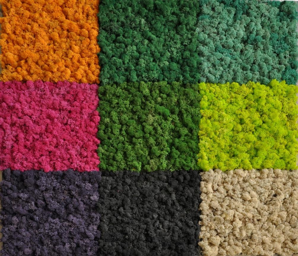 moss (3).jpg